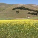 bici a Castelluccio per la fioritura di castelluccio di norcia